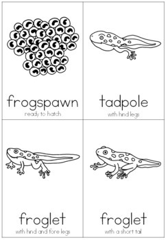 Frog life cycle nomenclature cards