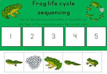 Frog life cycle sequencing activity worksheet