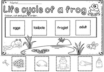 Frog lifecycle(50% off for 48 hours)