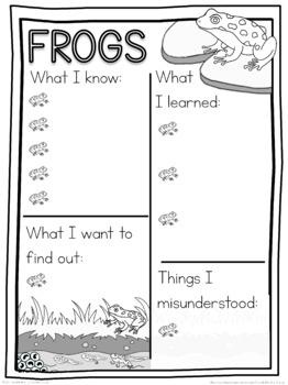 Frog schema  worksheet