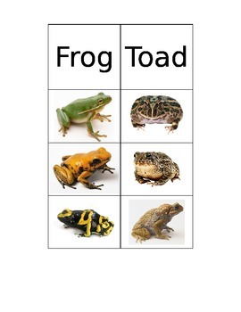 Frog versus Toad Sorting