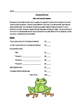 Frog/Human Muscular System