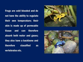 Frogs PowerPoint