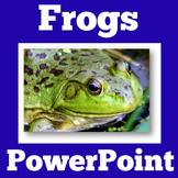 Frogs | PowerPoint Activity | Kindergarten 1st 2nd 3rd Gra