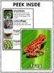Frog Activities Nonfiction Unit