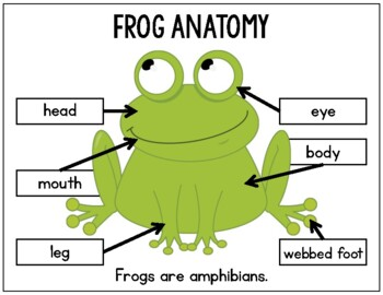 Frogs: Differentiated Science and Literacy Activities