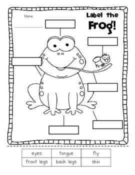 Frogs BUNDLE