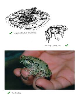 Frogs - Clip Art & Images to Color