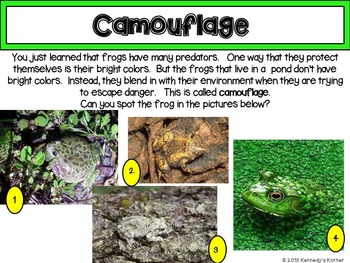 Frogs ~ Interactive Notebook and Power Point