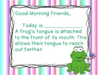 Frogs - Morning Messages