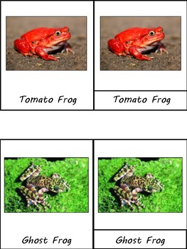 Frogs & Toads Unit