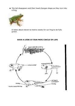 Frogs Workbook