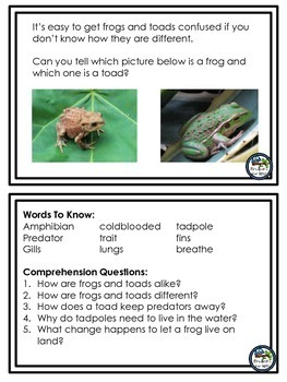 Frogs and Toads:  Amazing Amphibians nonfiction mini booklet