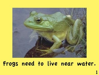 Frogs and Toads by Linda Zuniga