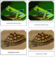 Frogs and Turtles Safari Toob Cards - Montessori