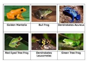 Frogs and Turtles Safari Toob Montessori Matchup Cards