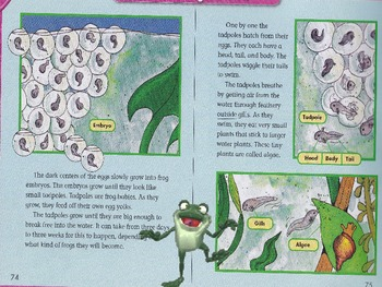 """Frogs"" from Reading Street brought to life through animations"