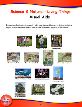 From A Seed To A Tree Song (Mp3), Visual Aids, and Activities