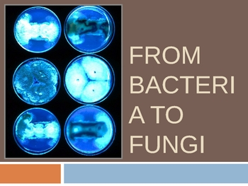 From Bacteria to Fungi