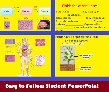 From Cells to Tissues to Organs Power Point