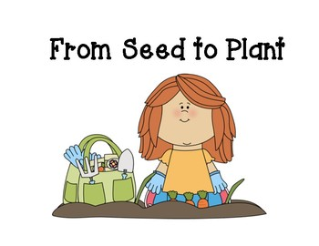 From Seed To Plant Vocabulary