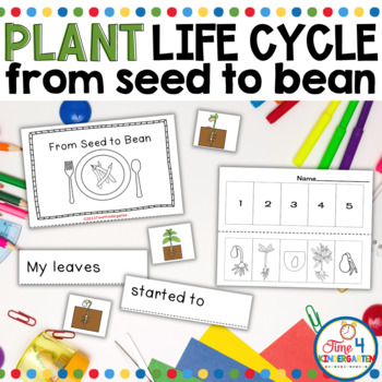 Plant Life Cycles: From Seed to Bean
