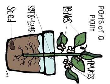 See How They Grow........ The Life Cycle of Plants and Plant Parts
