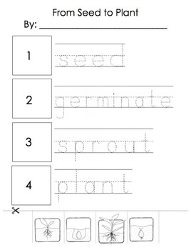From Seed to Plant: Cut and Paste activities & Flashcards for plant lifecycle