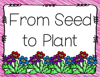 From Seed to Plant Focus Wall Anchor Charts and Word Wall Cards