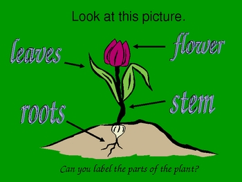 From Seed to Plant Harcourt Trophies powerpoint