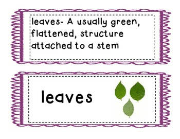 """From Seed to Plant""  Vocabulary Cards"
