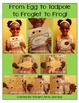 From Tadpole to Froglet to Frog! A fantastic foldbable & MORE!