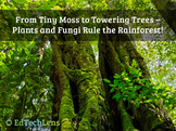 From Tiny Moss To Towering Trees – Plants And Fungi Rule The Rainforest PDF