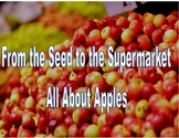 From the Seed to the Supermarket, All About Apples
