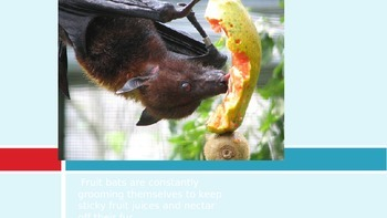 Fruit Bats PowerPoint