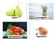 Fruit Flashcards with Vocabulary