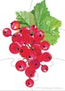 Fruit Jigsaw Puzzles