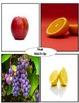 ASL Game Fruit Match-Up Set 1