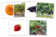 Fruit and Plant Matching Cards