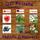 Fruits and their Trees / Plants and Flowers Categorization and Matching Activity