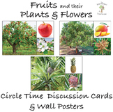 Fruits and their Trees & Flowers - Circle Time Discussion Cards and Wall Posters