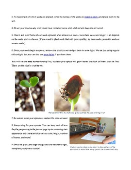 STEAM - Full Activity Planting Seeds
