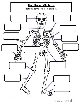 Full Adapted Lesson/Work Packet: The Human Skeleton