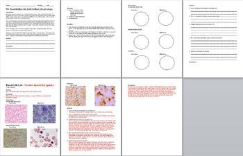 Full Year Biology Lesson Plans PowerPoint Presentations Note Outlines