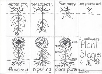 Fun Activities of the Plant Life Cycle