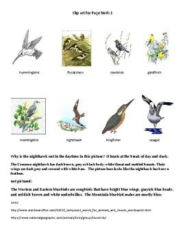 Fun Birds Compound Words Unscramble Activity