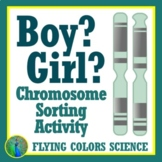 Chromosomes: Build a Boy or Girl Karyotype DNA Activity NGSS MS-LS3-1