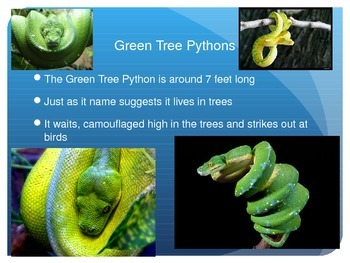 Fun Facts Pythons, link to video, informative text for common core