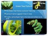 Fun Facts Pythons, link to video, informative text for com