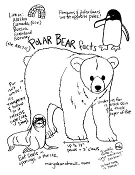 Fun Facts about Polar Bears Free Hand-drawn Printable Coloring Page